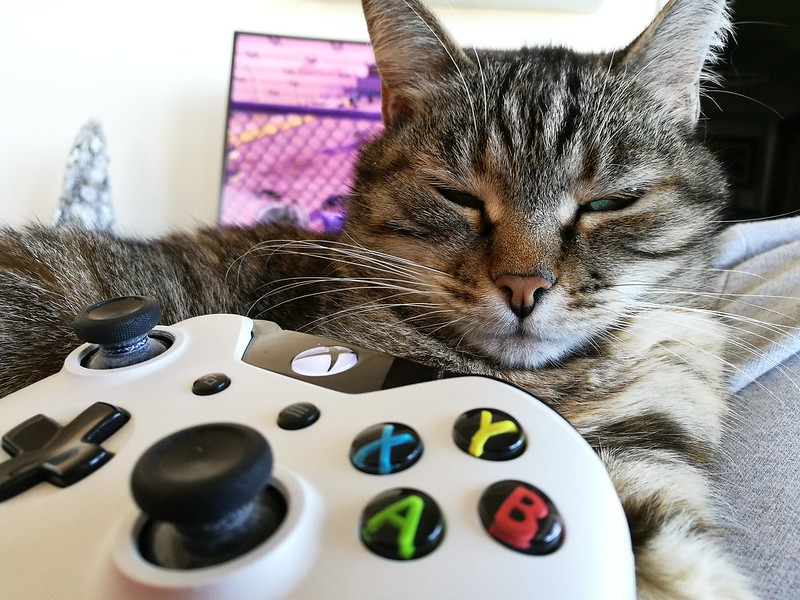 Cat with Xbox One Controller (not mine)